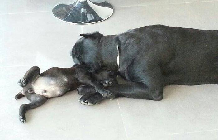 Shine abrazando a un cachorro