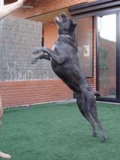 Nuka saltando