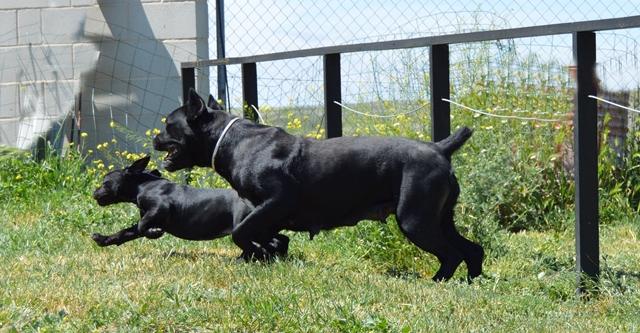 Mamá y su cachorro jugando al aire libre